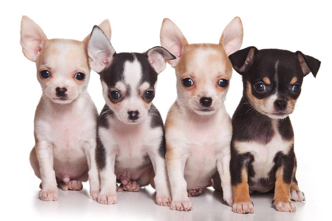 Uncios   Cães Grátis Funchal-3836