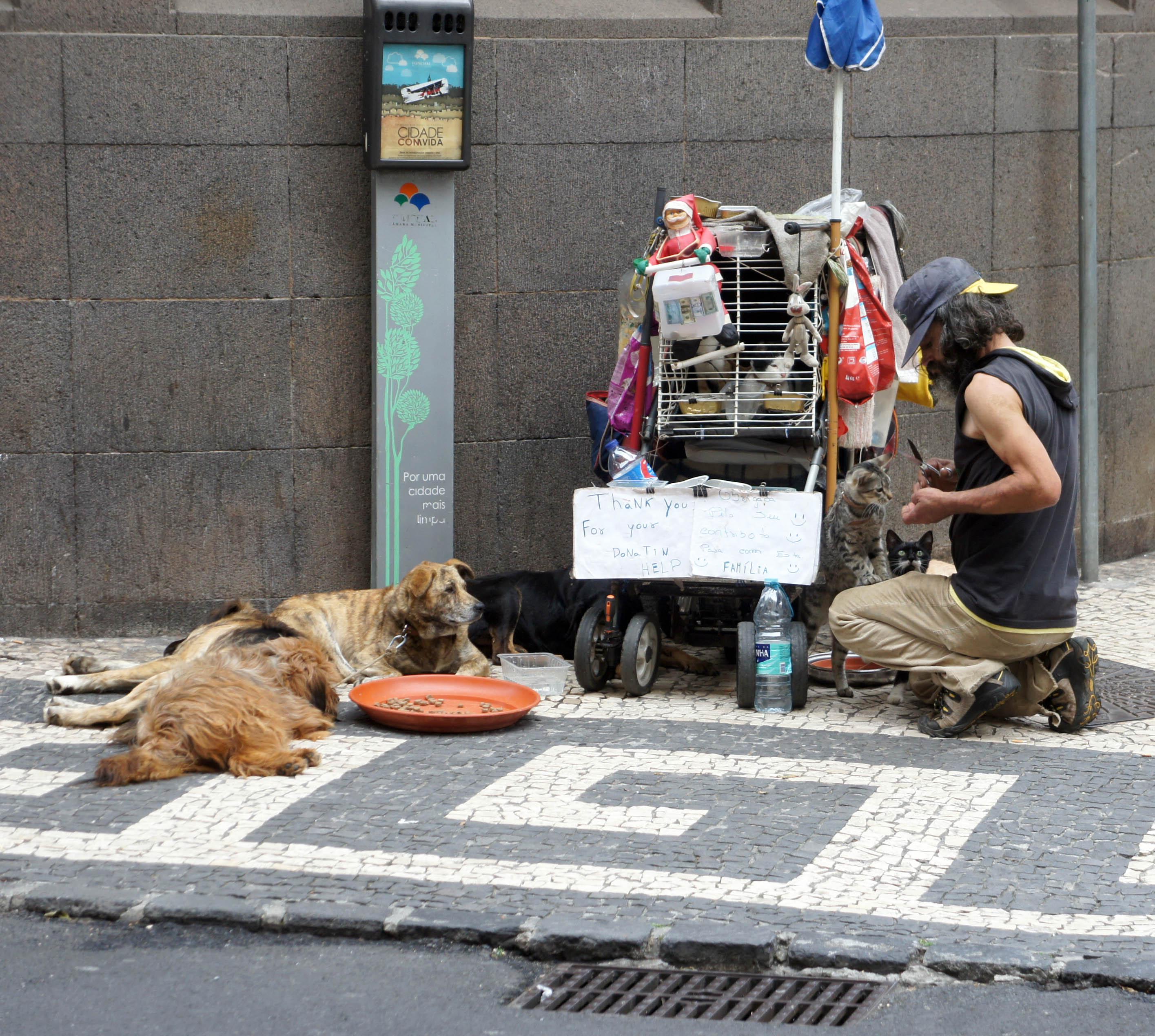 Uncios   Cães Grátis Funchal-8110