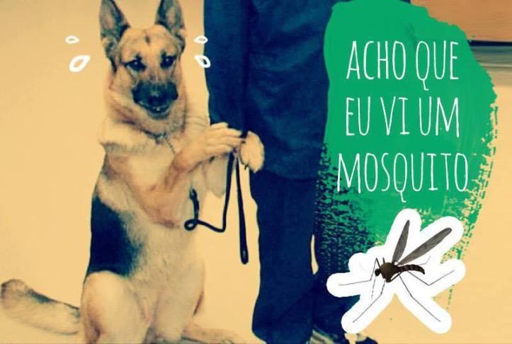 Uncios   Cães Grátis Funchal-3335