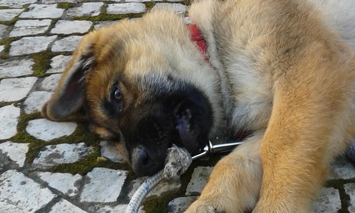 Uncios   Cães Grátis Funchal-2713